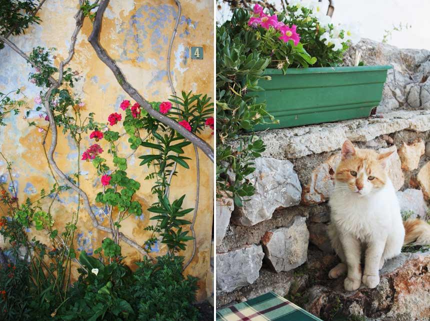 Neighbourhood 'wildlife' in Athens, Greece