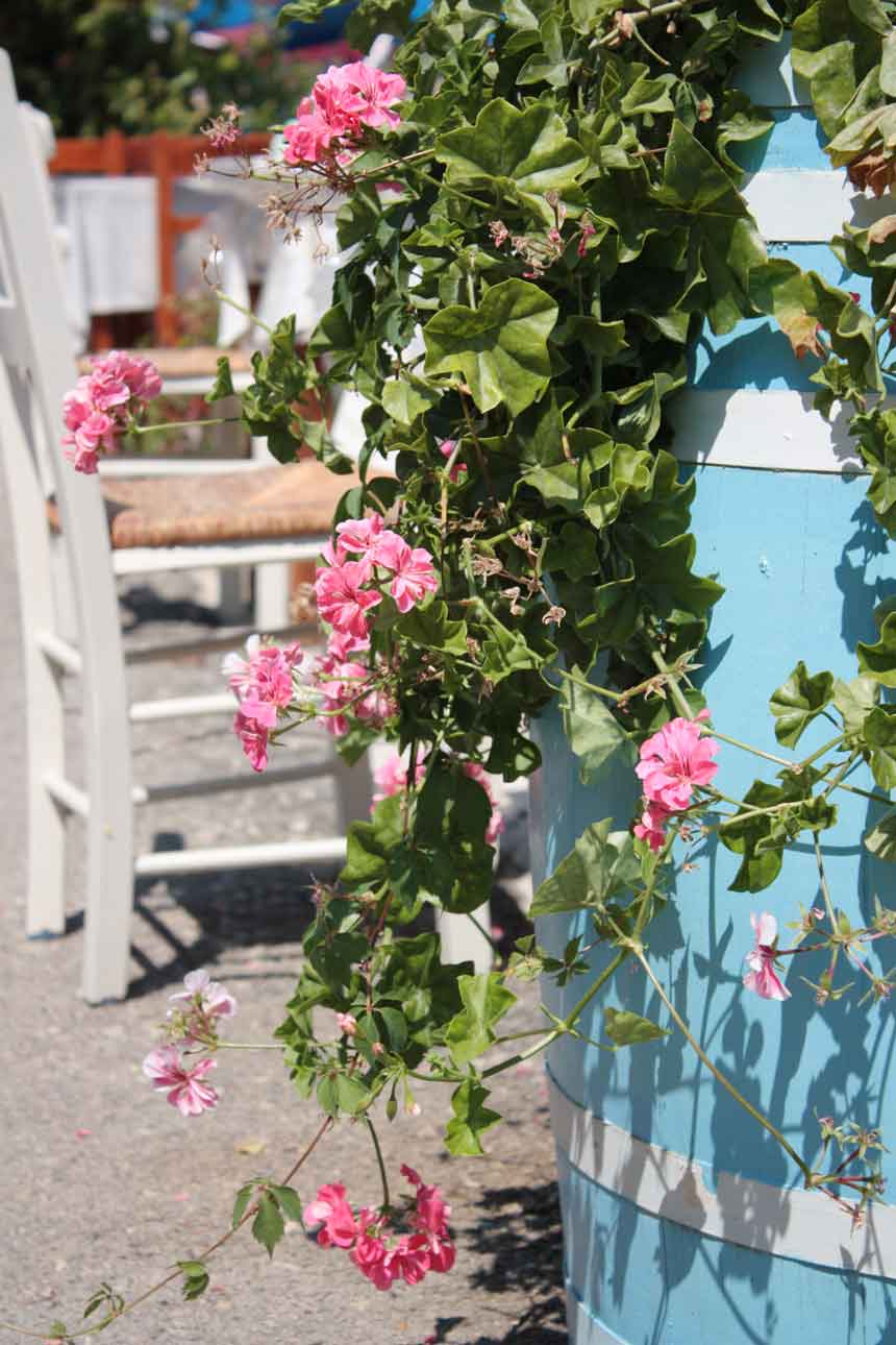 Little pictorial 'commercial break' ... a blue tub of flowers in a Greek taverna!